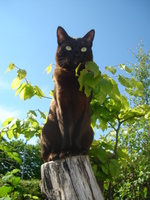 Asian cat on a tree