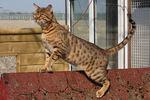 Красивый кот Чито