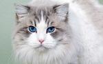 Bonny Ojos Azules
