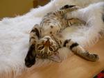 Очаровательный кот Чито