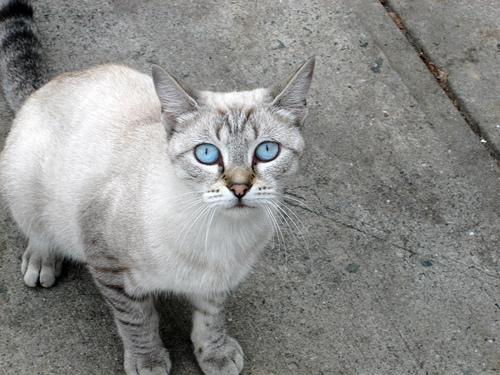 Charming Ojos Azules wallpaper
