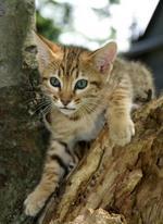 Чито на дереве