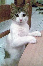 Симпатичный Эгейский кот