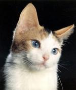 Cute Ojos Azules