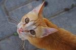 Cyprus cat face