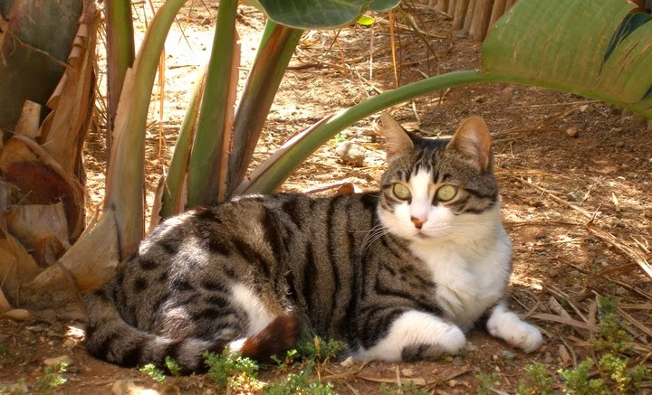 Cyprus cat in nature wallpaper