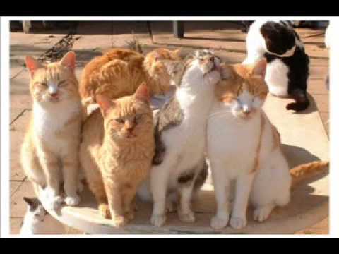 Cyprus cats wallpaper