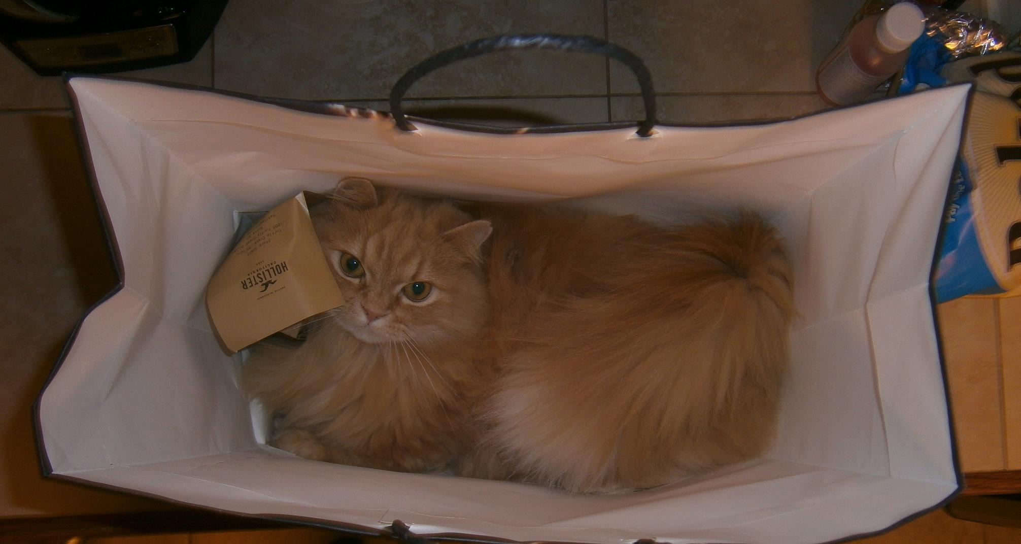Наполеон в коробке фото