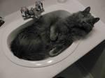Nebelung in sink