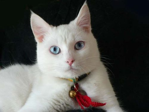 Ojos Azules face wallpaper