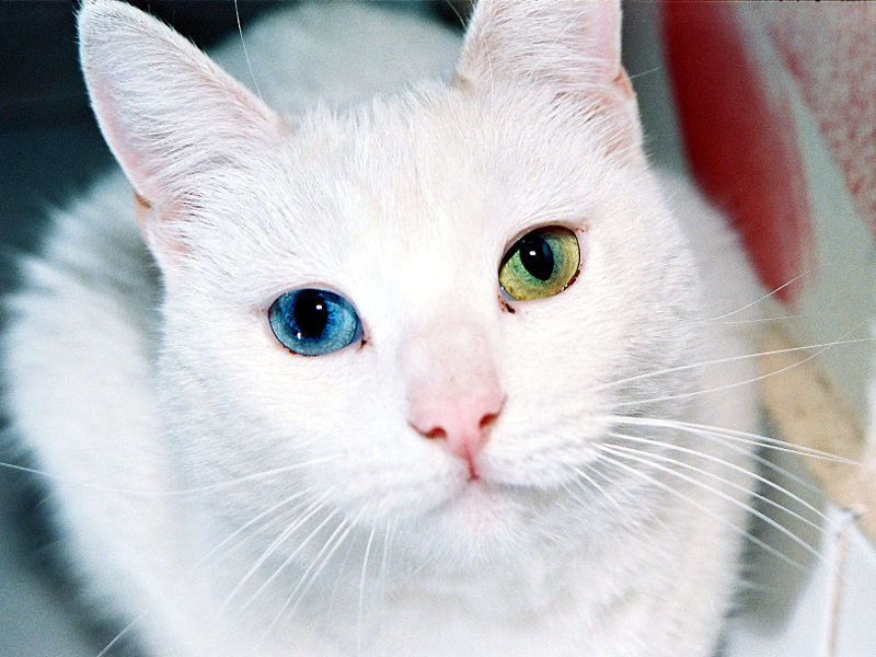 Ojos Azules wallpaper