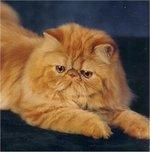 Pensive Persian