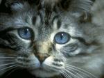 Sad Ojos Azules