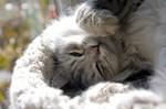 Sleeping Siberia
