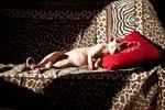 Спящий кот породы Сфинкс