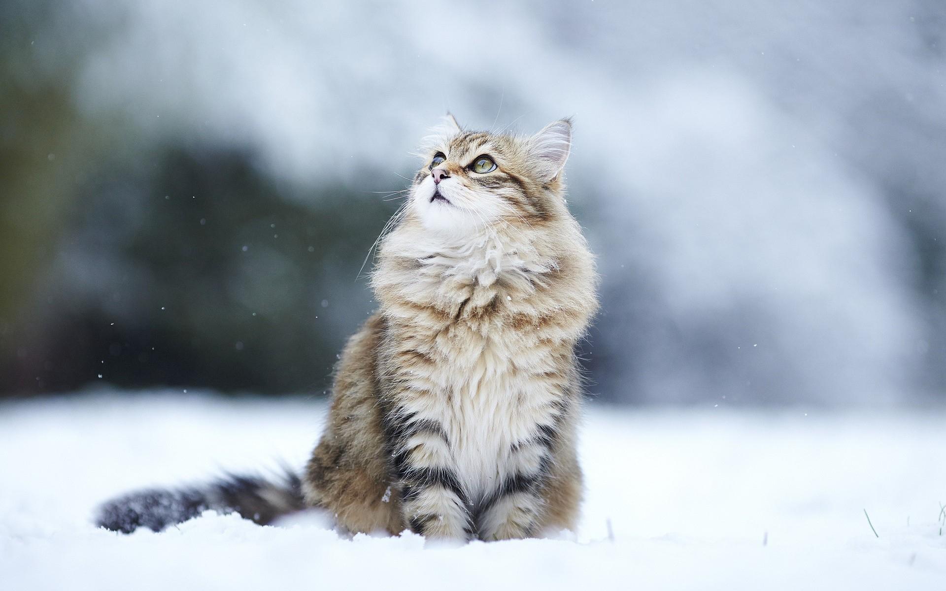 Winter Siberia wallpaper